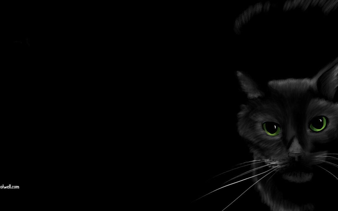 Black Cat Wallpaper!
